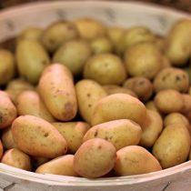 Tienda Online patatas